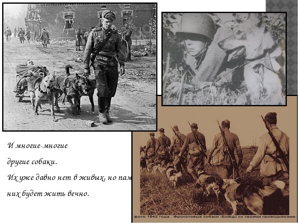 И многие-многие другие собаки. Их уже давно нет в живых, но память о них буде...