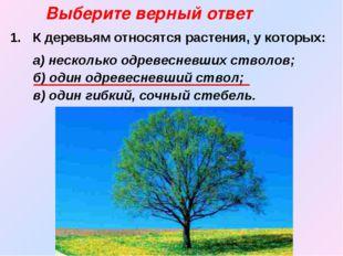 К деревьям относятся растения, у которых:  а) несколько одревесневших ствол