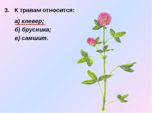 3. К травам относится:  а) клевер; б) брусника; в) самшит.