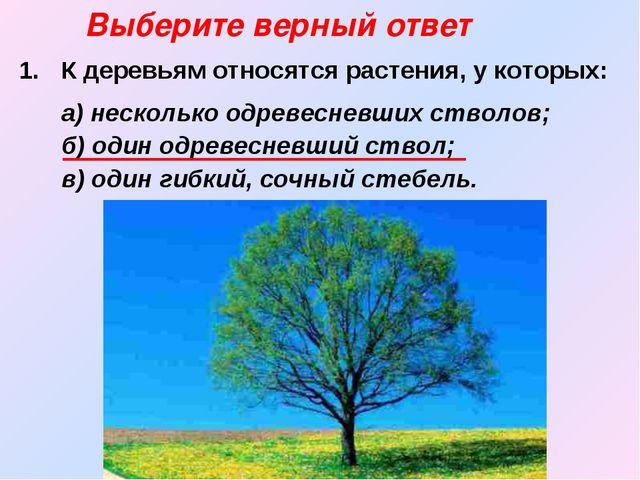 К деревьям относятся растения, у которых:  а) несколько одревесневших ствол...