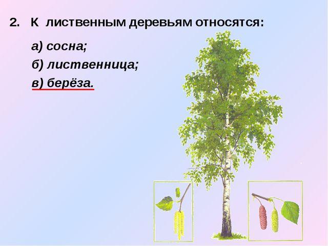 2. К лиственным деревьям относятся:  а) сосна; б) лиственница; в) берёза.