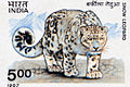 https://upload.wikimedia.org/wikipedia/commons/thumb/5/5b/Snow_leopard_marks.jpg/120px-Snow_leopard_marks.jpg