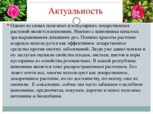 Актуальность Одним из самых полезных и популярных лекарственных растений явля