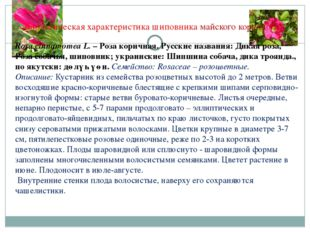 Биологическая характеристика шиповника майского коричного Rosa cinnamomea L.