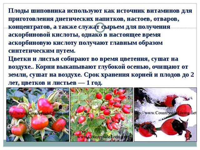 Плоды шиповника используют как источник витаминов для приготовления диетическ...