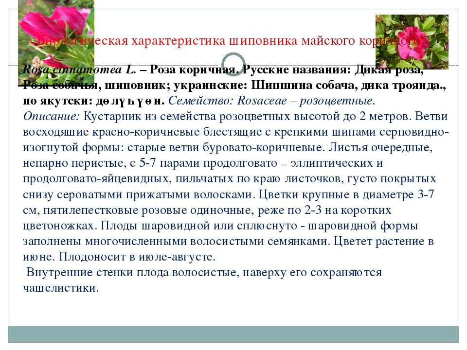 Биологическая характеристика шиповника майского коричного Rosa cinnamomea L....