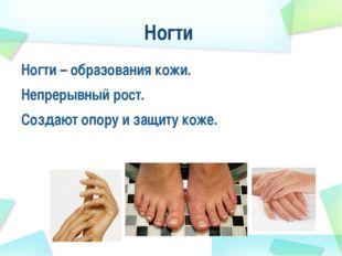Ногти Ногти – образования кожи. Непрерывный рост. Создают опору и защиту коже.