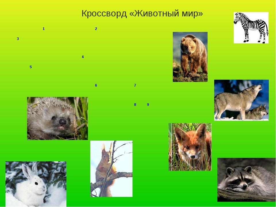 Кроссворд «Животный мир» 12 3  4 5  6...