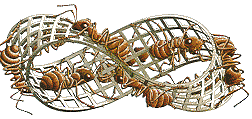 http://www.im-possible.info/images/articles/escher_math/mobius_strip_small.gif