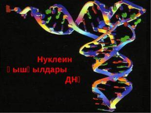 Нуклеин қышқылдары ДНҚ