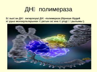 ДНҚ полимераза Бұзылған ДНҚ лигирлеуші ДНҚ-полимераза (бірнеше бірдей нәруыз