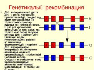 Генетикалық рекомбинация ДНҚ екі оралмасы әдетте ДНҚ өзге бөліктерімен әрекет