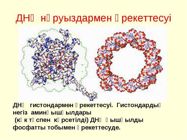 ДНҚ нәруыздармен әрекеттесуі ДНҚ гистондармен әрекеттесуі. Гистондардың негіз...