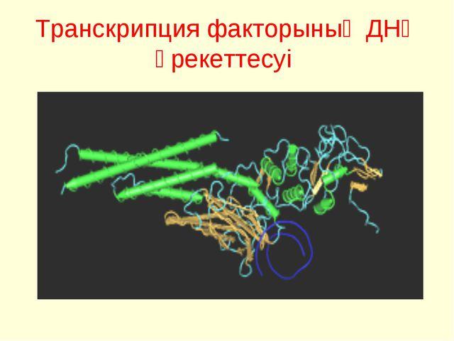 Транскрипция факторының ДНҚ әрекеттесуі
