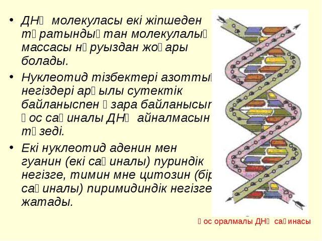 ДНҚ молекуласы екі жіпшеден тұратындықтан молекулалық массасы нәруыздан жоғар...