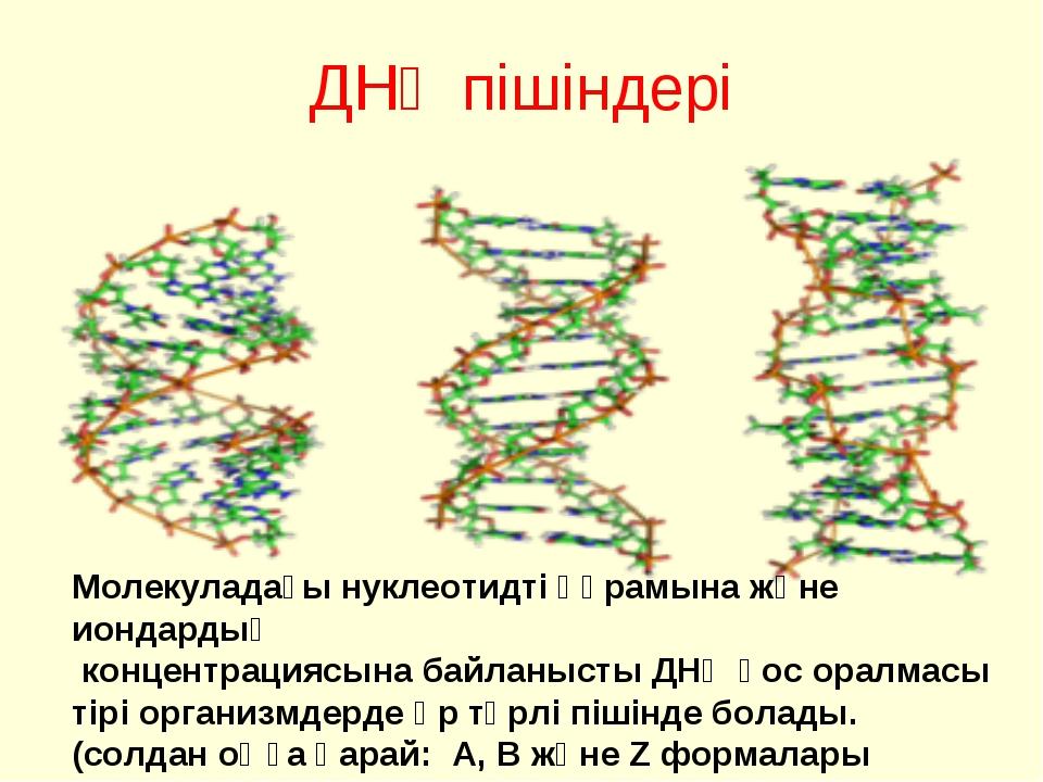 ДНҚ пішіндері Молекуладағы нуклеотидті құрамына және иондардың концентрациясы...
