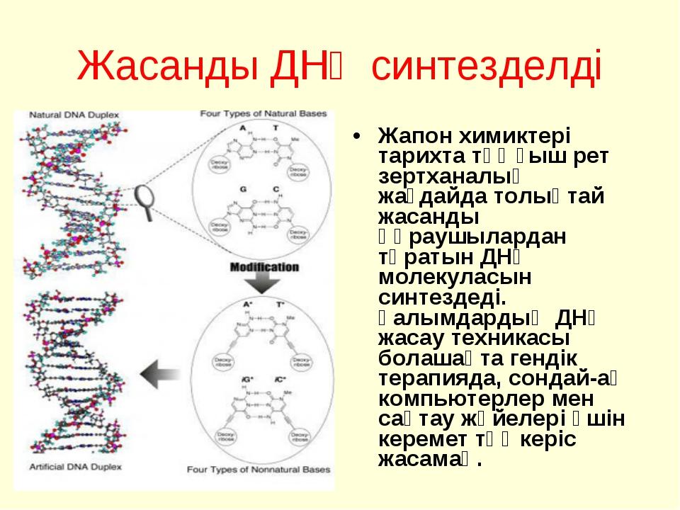 Жасанды ДНҚ синтезделді Жапон химиктері тарихта тұңғыш рет зертханалық жағдай...