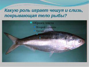 Какую роль играет чешуя и слизь, покрывающая тело рыбы?