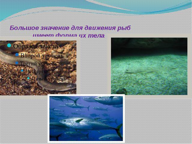 Большое значение для движения рыб имеет форма их тела