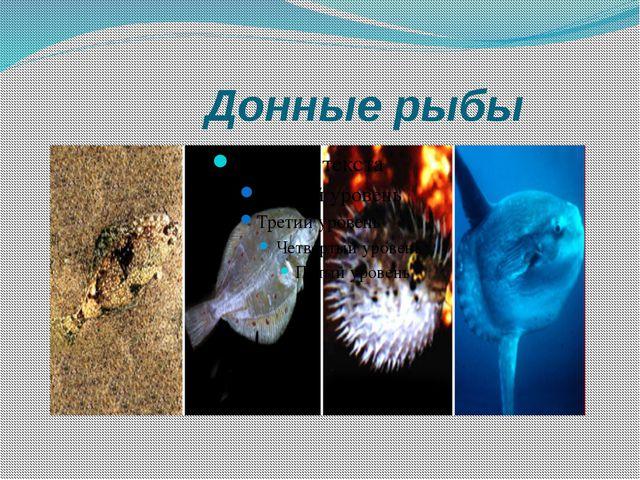 Донные рыбы