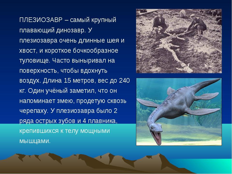 ПЛЕЗИОЗАВР – самый крупный плавающий динозавр. У плезиозавра очень длинные ш...