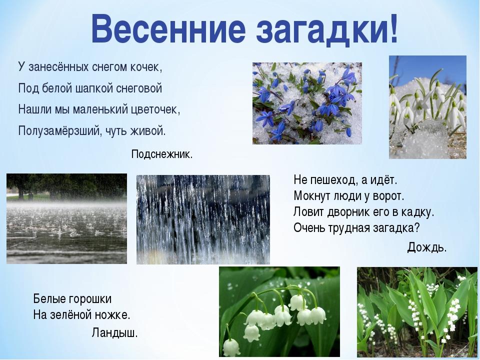 У занесённых снегом кочек, Под белой шапкой снеговой Нашли мы маленький цвето...