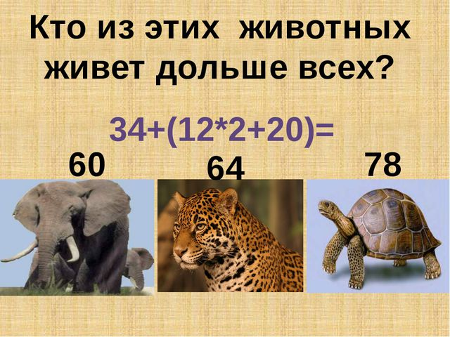 Кто из этих животных живет дольше всех? 34+(12*2+20)= 78 60 64