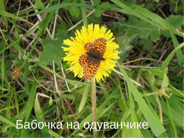 Бабочка на одуванчике
