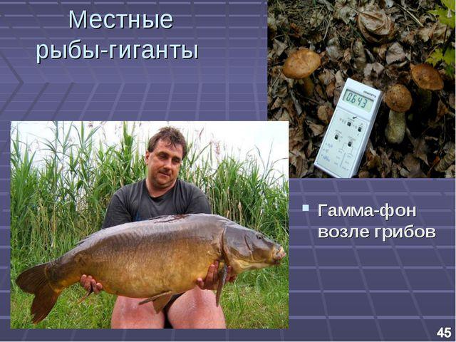 Местные рыбы-гиганты Гамма-фон возле грибов