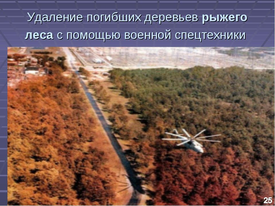 Удаление погибших деревьев рыжего леса с помощью военной спецтехники
