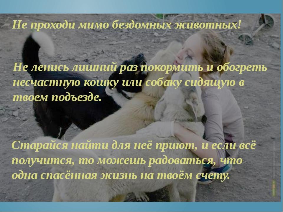 Не проходи мимо бездомных животных! Не ленись лишний раз покормить и обогреть...