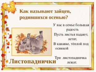 Как называют зайцев, родившихся осенью? Листопаднички У нас в семье большая р