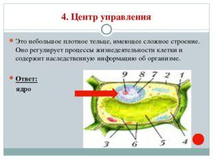 4. Центр управления Это небольшое плотное тельце, имеющее сложное строение. О