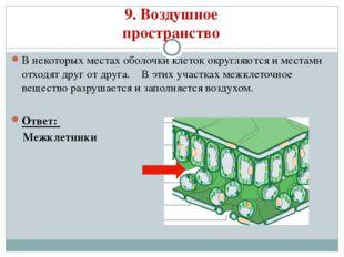9. Воздушное пространство В некоторых местах оболочки клеток округляются и ме