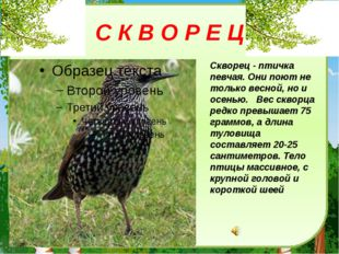 С К В О Р Е Ц Скворец - птичка певчая. Они поют не только весной, но и осенью