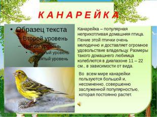К А Н А Р Е Й К А Канарейка– популярная неприхотливая домашняя птица. Пение