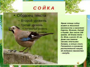 Яркая птица сойка живет в лесистой местности и населяет Европу, Японию, Китай