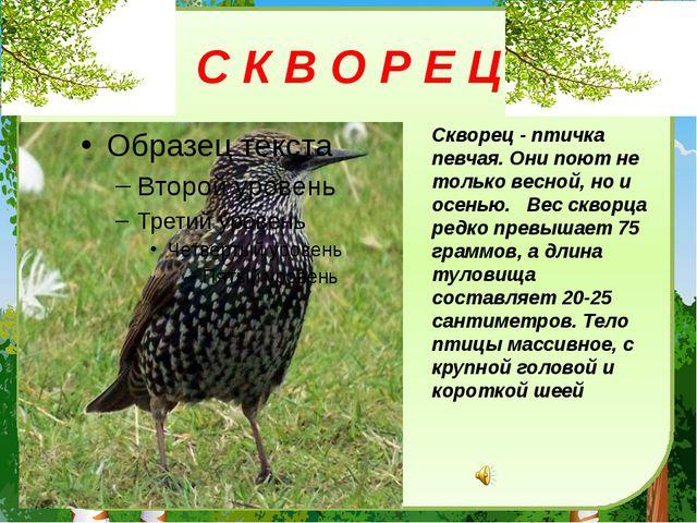 С К В О Р Е Ц Скворец - птичка певчая. Они поют не только весной, но и осенью...