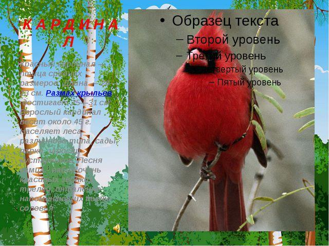 К А Р Д И Н А Л Красный кардинал — птица средних размеров. Длина — 20—23 см....