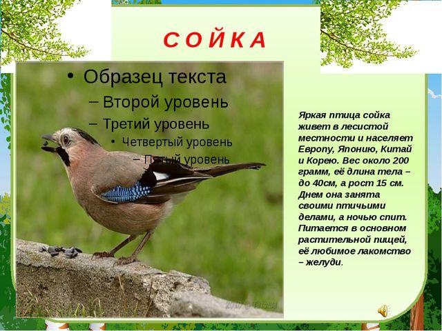 Яркая птица сойка живет в лесистой местности и населяет Европу, Японию, Китай...