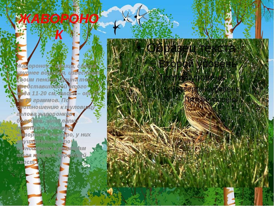 ЖАВОРОНОК Жаворонок – птица, слегка крупнее воробья, известная своим пением....