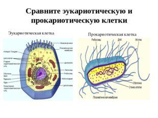Сравните эукариотическую и прокариотическую клетки Эукариотическая клетка Про