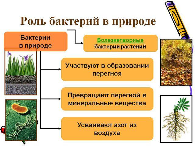 Роль бактерий в природе и жизни человека