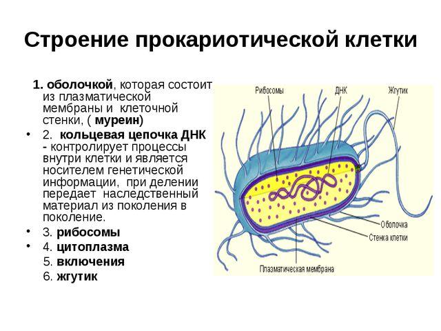 Строение прокариотической клетки 1. оболочкой, которая состоит из плазматичес...