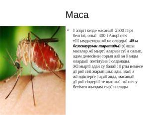Маса Қазіргі кезде масаның 2500 түрі белгілі, оның 400-і Anopheles тұқымдаста