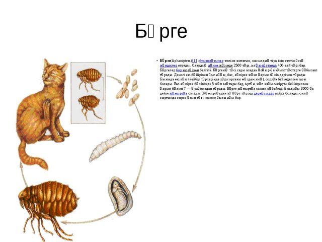 Бүрге Бүрге(Aphanіptera)[1]–буынаяқтылартипіне жататын, масылдық тіршілік е...