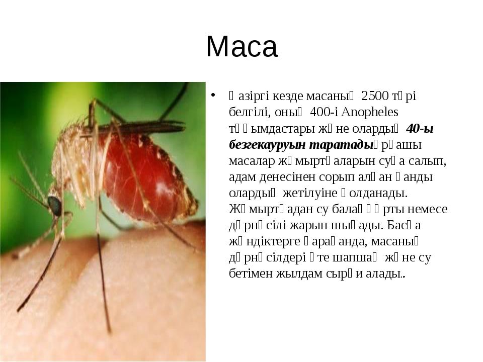 Маса Қазіргі кезде масаның 2500 түрі белгілі, оның 400-і Anopheles тұқымдаста...
