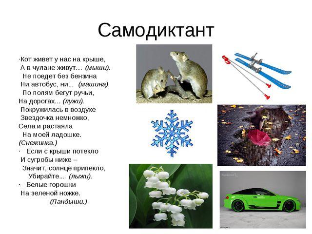 Самодиктант ·Кот живет у нас на крыше, А в чулане живут… (мыши). Не поедет б...