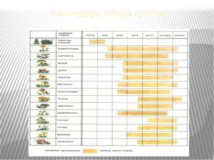 Календарь сбора грибов