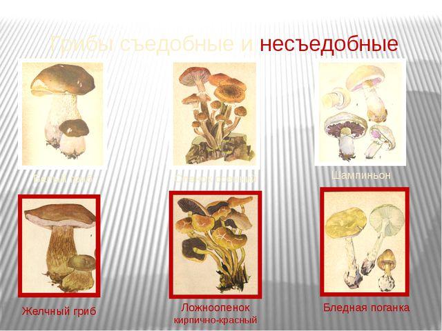 Грибы съедобные и несъедобные Белый гриб Опенок осенний Шампиньон Желчный гри...